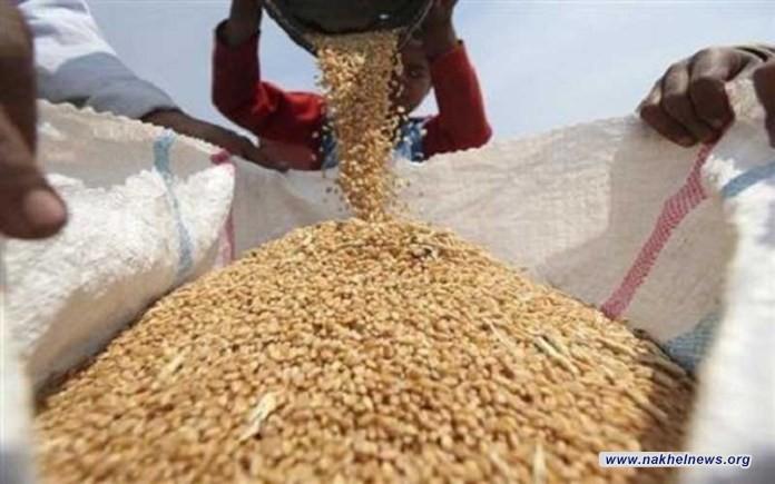 """الديون وفواتير الحكومة تحاصر 90% من مزارعي """"الحب الأسمر"""" بإحدى المحافظات.. سلة الخبز بخطر"""