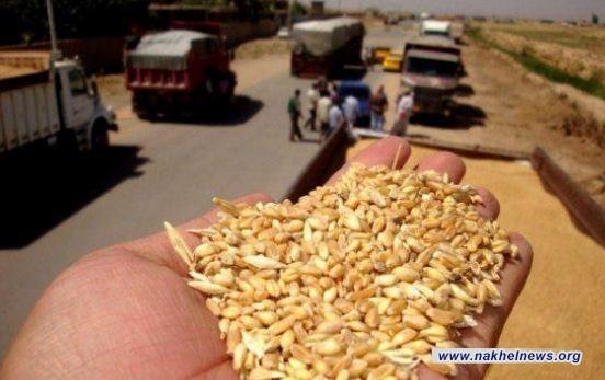 الشركة العامة لتجارة الحبوب تعلن كميات الحنطة المحلية المسوقة في مخازنها