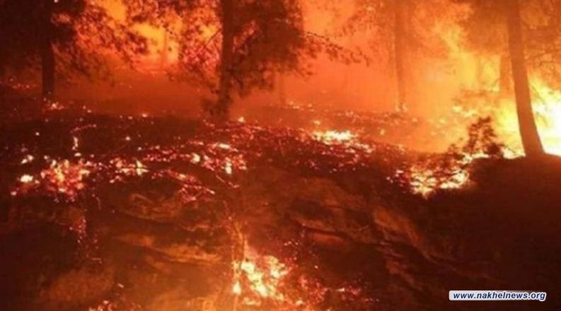 اشتعال 19 حريقا في مستوطنات الاحتلال الاسرائيلي المتاخمة لقطاع غزة