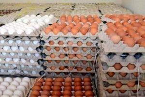 الزراعة: بعض الوزارات لا تتعاون لحماية المنتوج المحلي من البيض